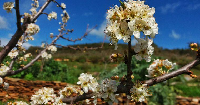 Querida primavera!