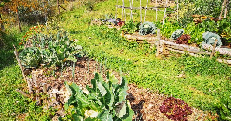 Macrobiotics, Permaculture and Biodynamics